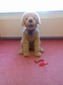 Furreal dog- Biscuit toy