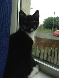 Cheeky chap ready for forever home!