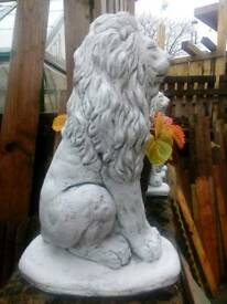 Small lion