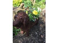 Long dog planter unusual and very pretty