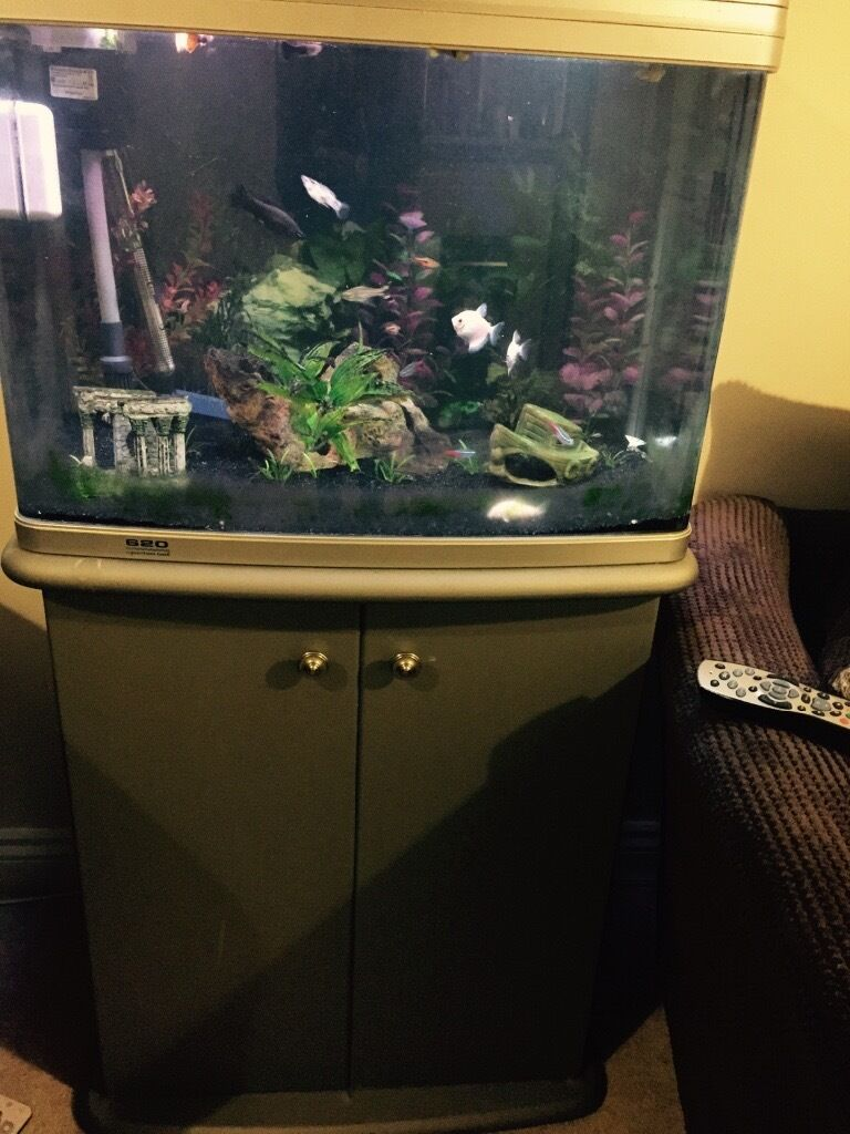 Fish aquarium for sale in karachi - Aquarium Fish Tank Northamptonshire Fish Tank Stand Cupboard Fish Pump And Led Lights