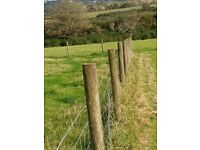 Sheep fence for sale