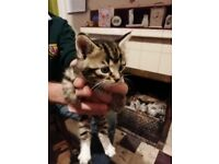 Both kittens allocated at the moment. Any changes and we will call or readvertise.