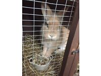 Small female rabbit