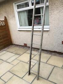 Ladder single 12ft