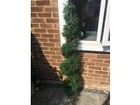 Faux twisted topiary tree