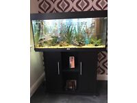 Juwel 180 Rio Fish tank and stand in black ( Fish and plants NOT included)
