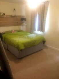 ENSUITE double room to rent