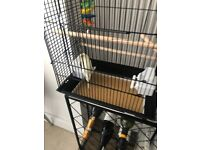 Found! Canary in Acton W3 Area