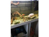 Large fish tank with fish