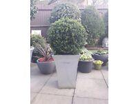 Large box Hedge