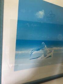Sea photo picture
