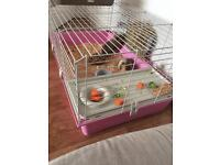 X2 male guinea pigs and indoor cage