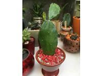 Cactus/succulent