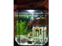 Fish tank complete with filter 30 litres with 6 cold water fish and decorations