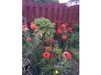 Brighten up your garden- Box of plants