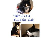 Missing Tuxedo Male Cat