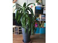Free house plant