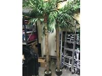2 x Palm trees 8ft