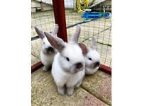 Bunnies rabbit