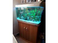 165 litre fish tank aquarium, cabinet stand, filter pump, accessories and fish