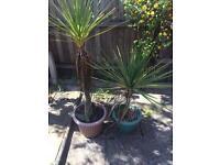 2 plastic plant pots and plants