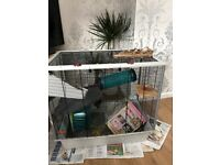 Rats and cage full of accessories for sale