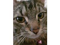 Cat Sitter - Derby City