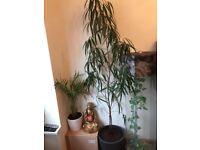 LOVELY HOUSE PLANTS