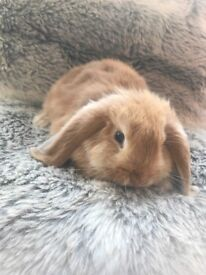 Beautiful baby rabbits for sale