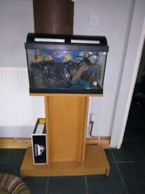 Selling fish tank comes with all pumps filter and stand
