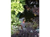 Pond / pond pump /plants / waterfall
