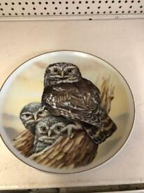 Plate little owl