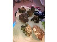Marine live rock for sale
