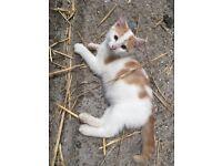 Gorgeous Kitten For Sale