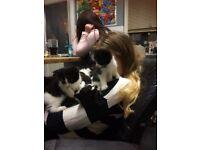 8 fluffy kittens l@@k.......