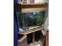 Aquarium and assorted tropical fish