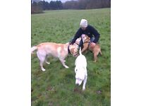 Professional, Caring and Reliable Dog Walking and Pet Sitting - Shirley, West Wickham & Gravel Hill