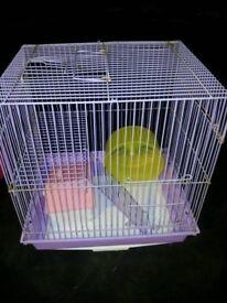 Purple hamster cage