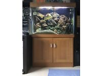 Complete fish tank set up includes fish