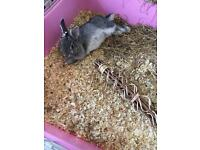 Rabbit for looking a new forever home