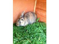 Rabbits in need of home