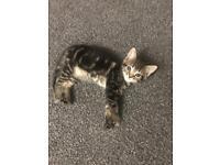 Kitten (girl)