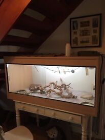 vivarium complete 4ft x2ft x 2ft including heaters lamps and accessories