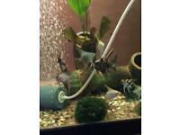Various colours and pattern angel fish available