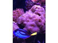 Marine coral
