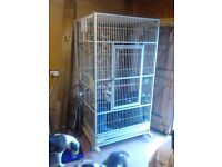 large parrot cage 2mtr x 1.3 mtr metal cage in white with removable tray and toys