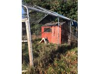 Chicken run and shed for free
