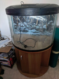 190L Curved fish tank with stand and extras!