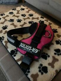 Julius harness new
